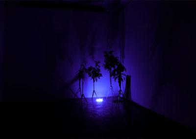 © Charlotte Dalia, image extraite de la vidéo-installation « Evergreen ».
