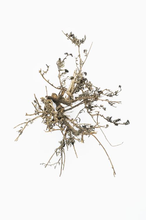 Abdessamad El Montassir, « Mémoires des cendres [espaces oubliés, espèces oubliées] »
